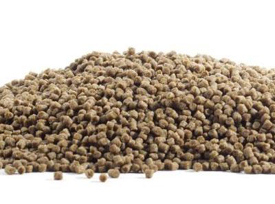 fish pellet
